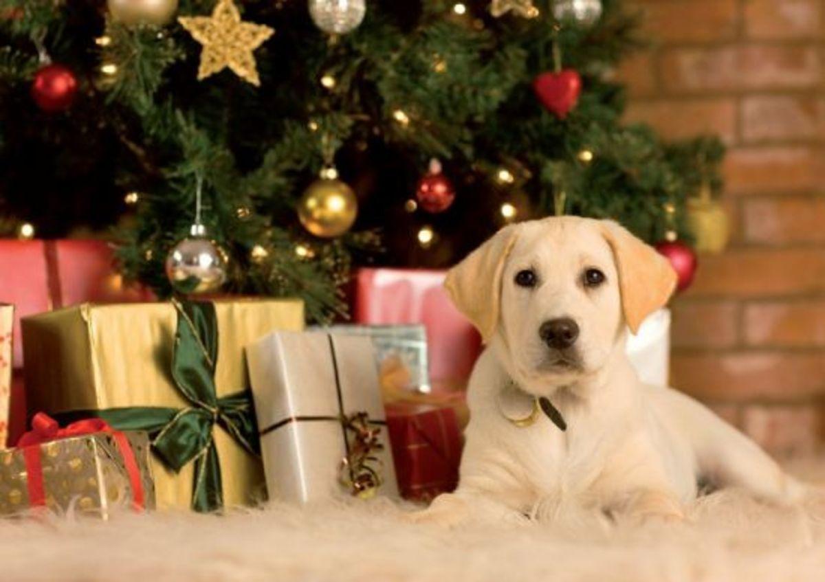 dogchristmas-ccflrc-howardlake
