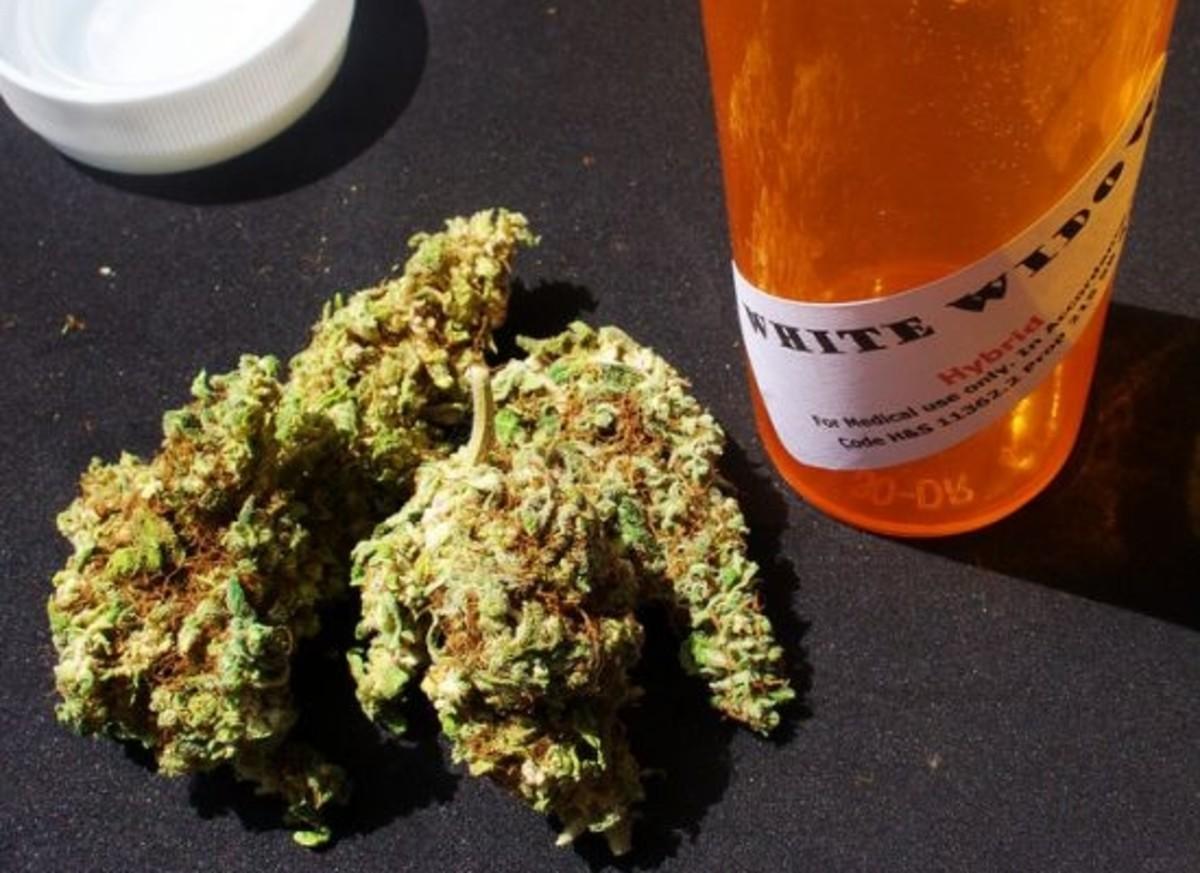 cannabis-ccflcr-eggrole