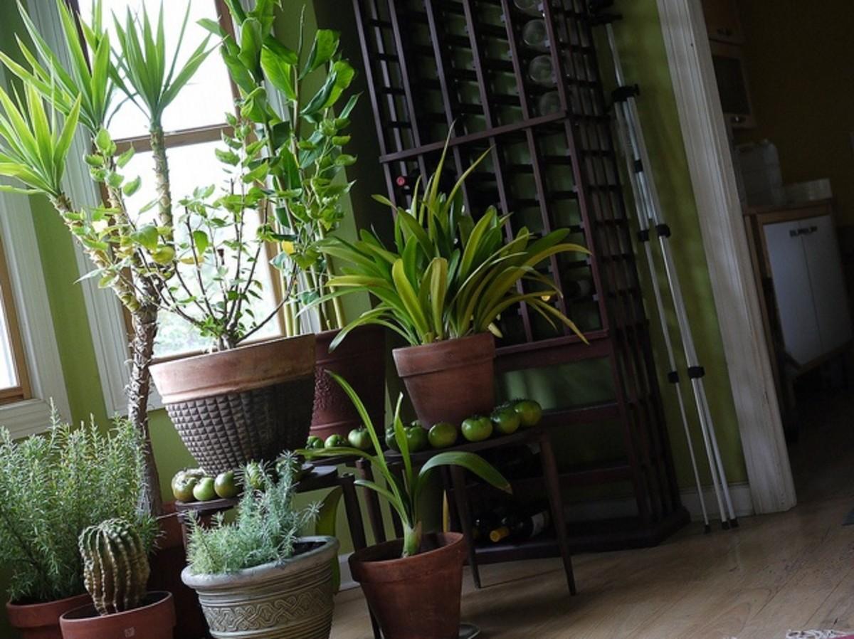 Cluster of indoor plants