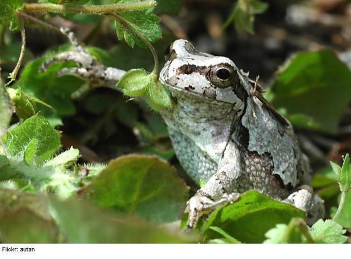 froggy23