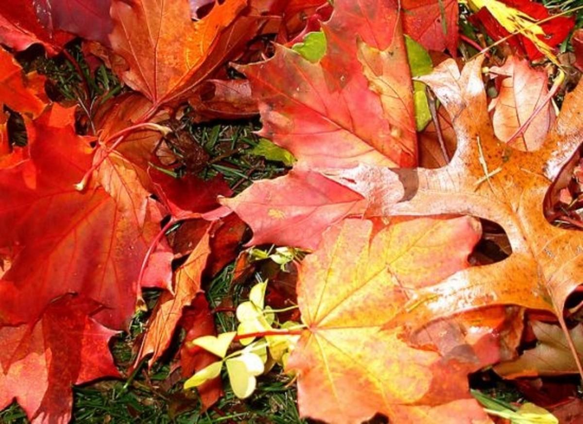 foliage-ccflcr-sponselli