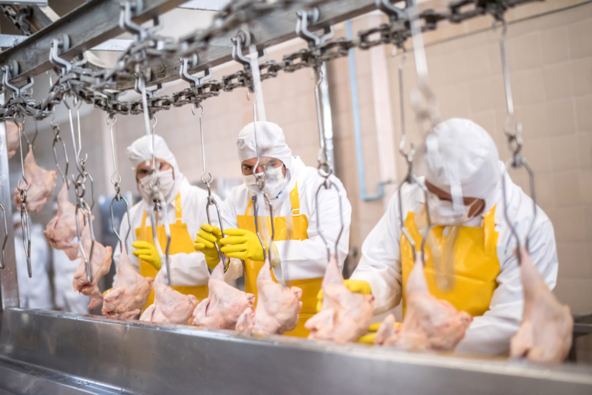 National Chicken Council Lobbies for Deregulation of Poultry Processing Speeds