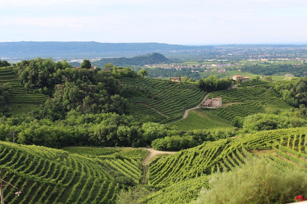 Italian Wine: Where to Sip and Savor the Best Organic Wine in Italy