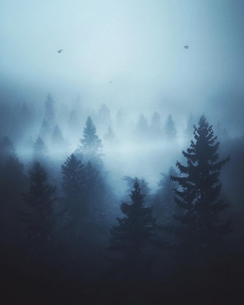 Instagram pics of foggy forests are captivating.
