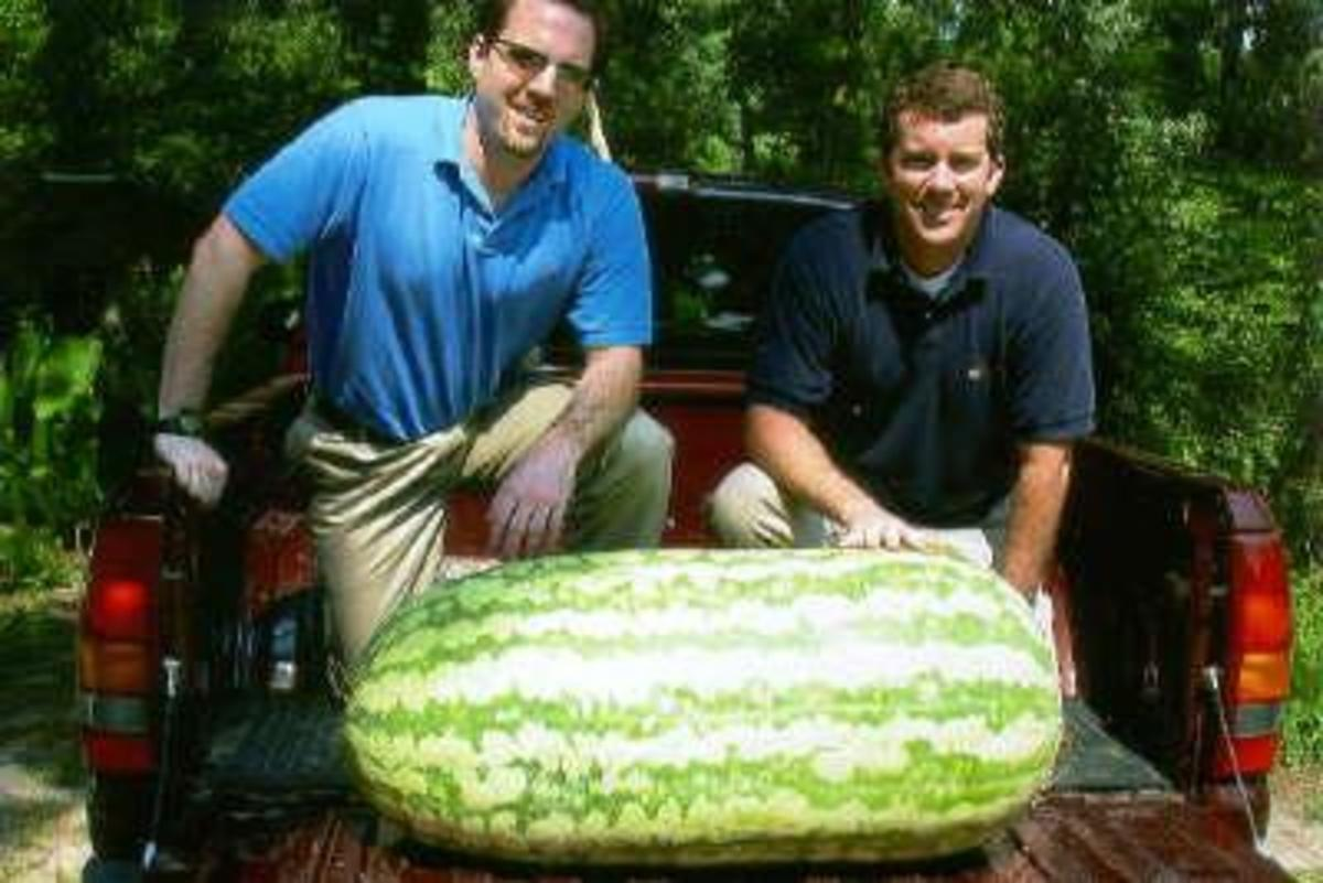 giantwatermelon