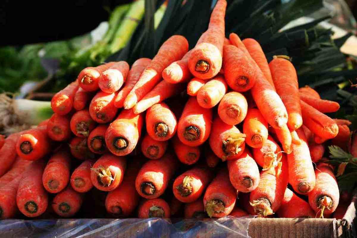 carrots6-15
