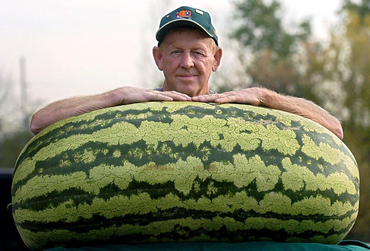 giant-melon