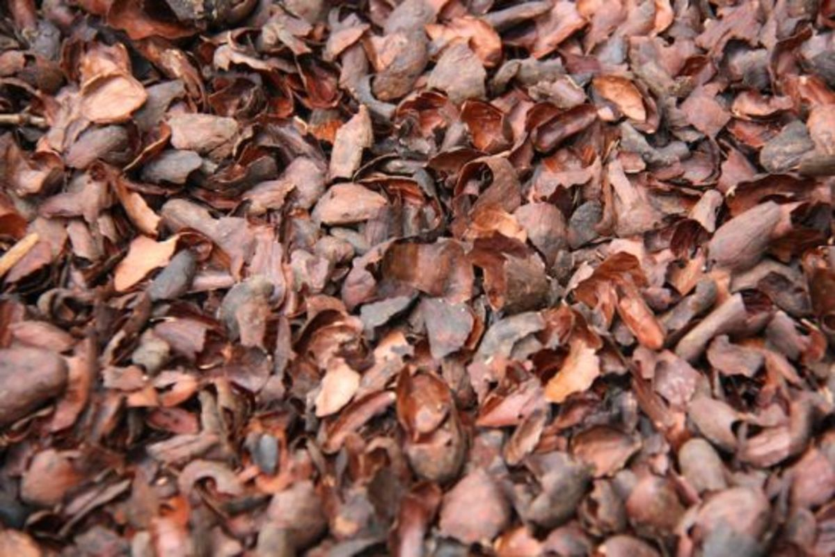 7 Reasons Your Garden Will Love Cocoa Mulch