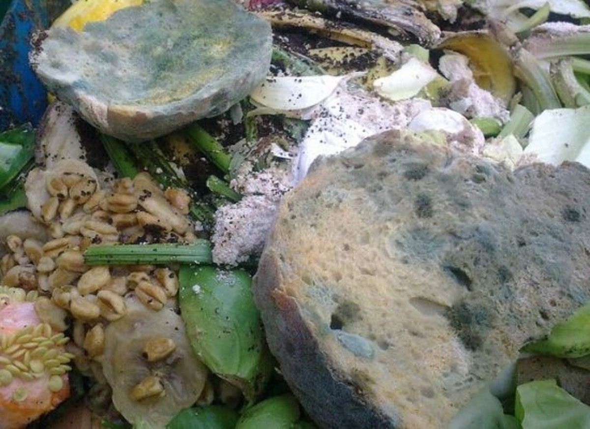 foodwaste-ccflcr-NickSaltmarsh1