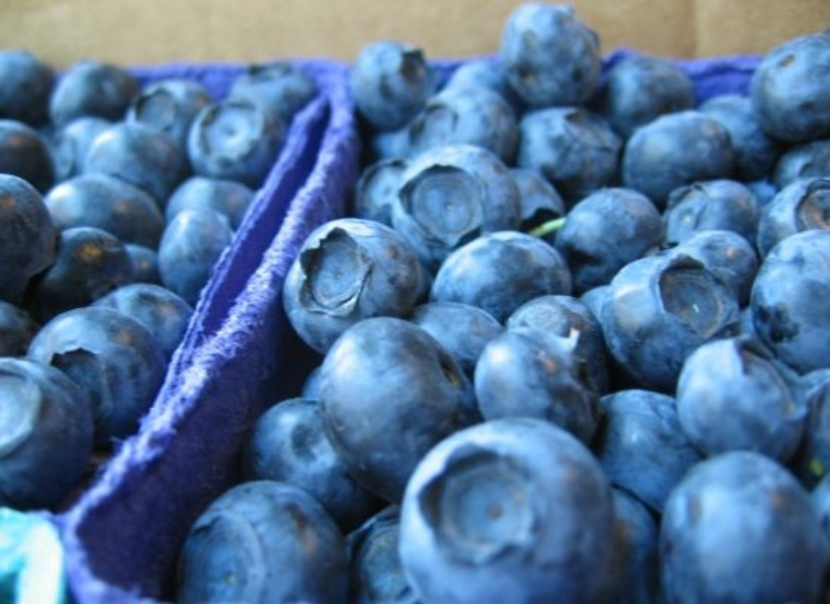 blueberries-ccflcr-brx0