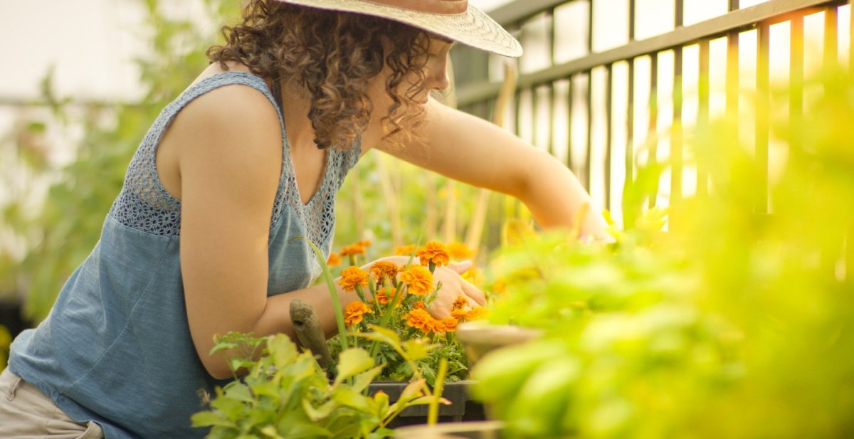 11 Fun New Herbs and Vegetables to Grow in Your Home Garden