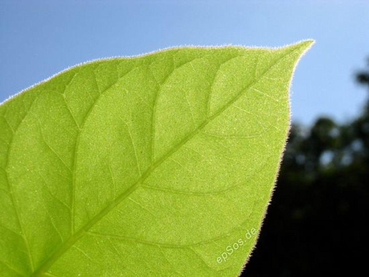 leaf-ccflcr-epsos