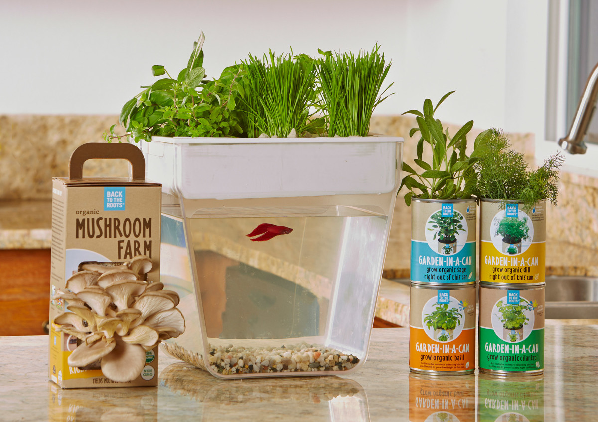 Use this food waste to grow mushrooms.