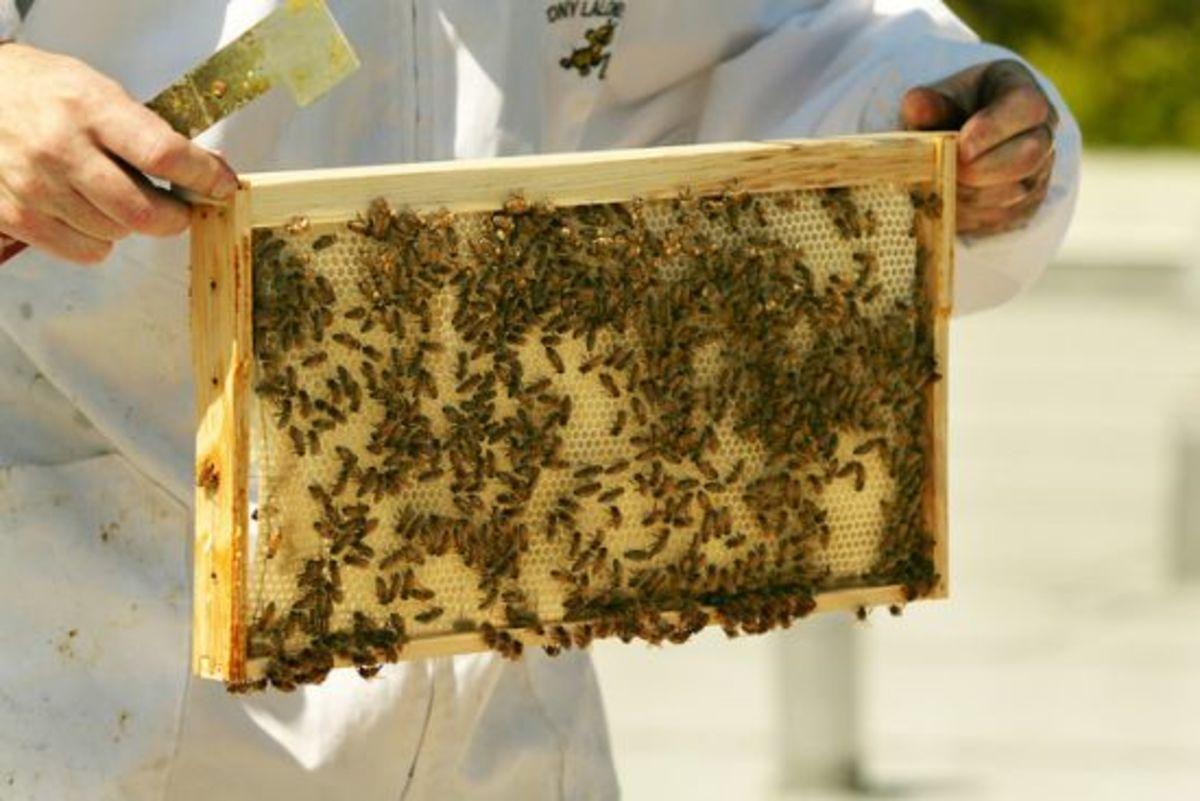 beehive-ccflcr-thompsonrivers