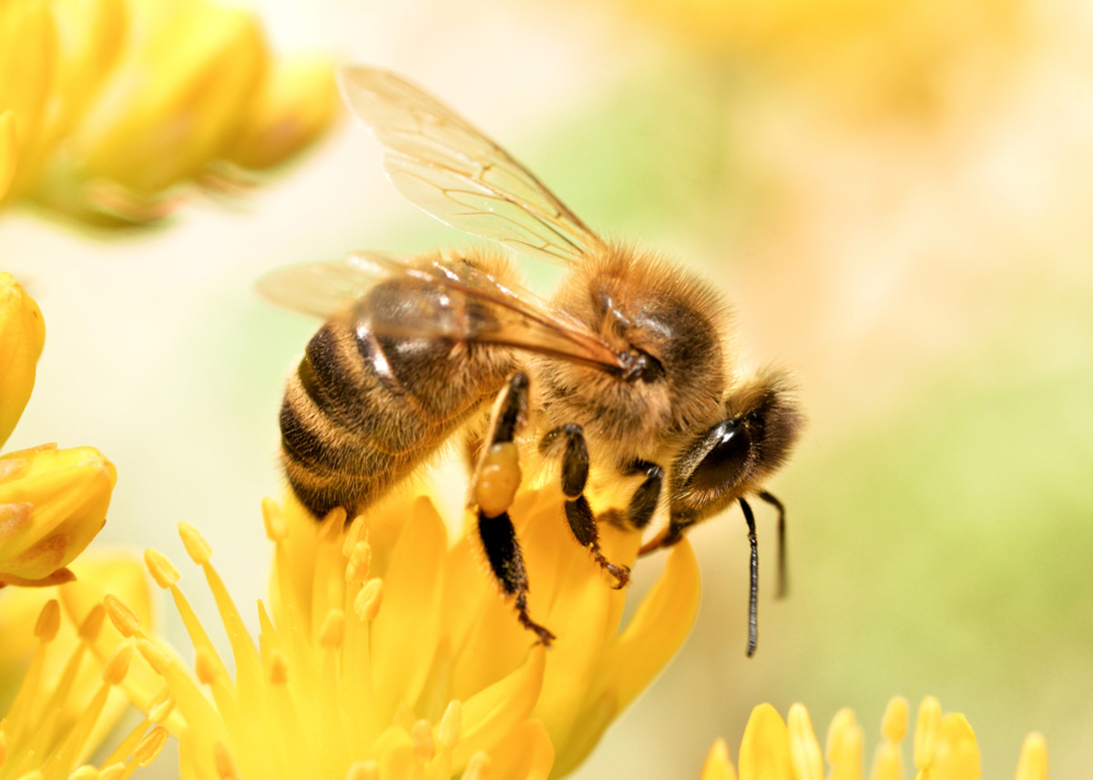 Honey Bees Become Addicted to the Pesticides That Are Killing Them, Study Finds