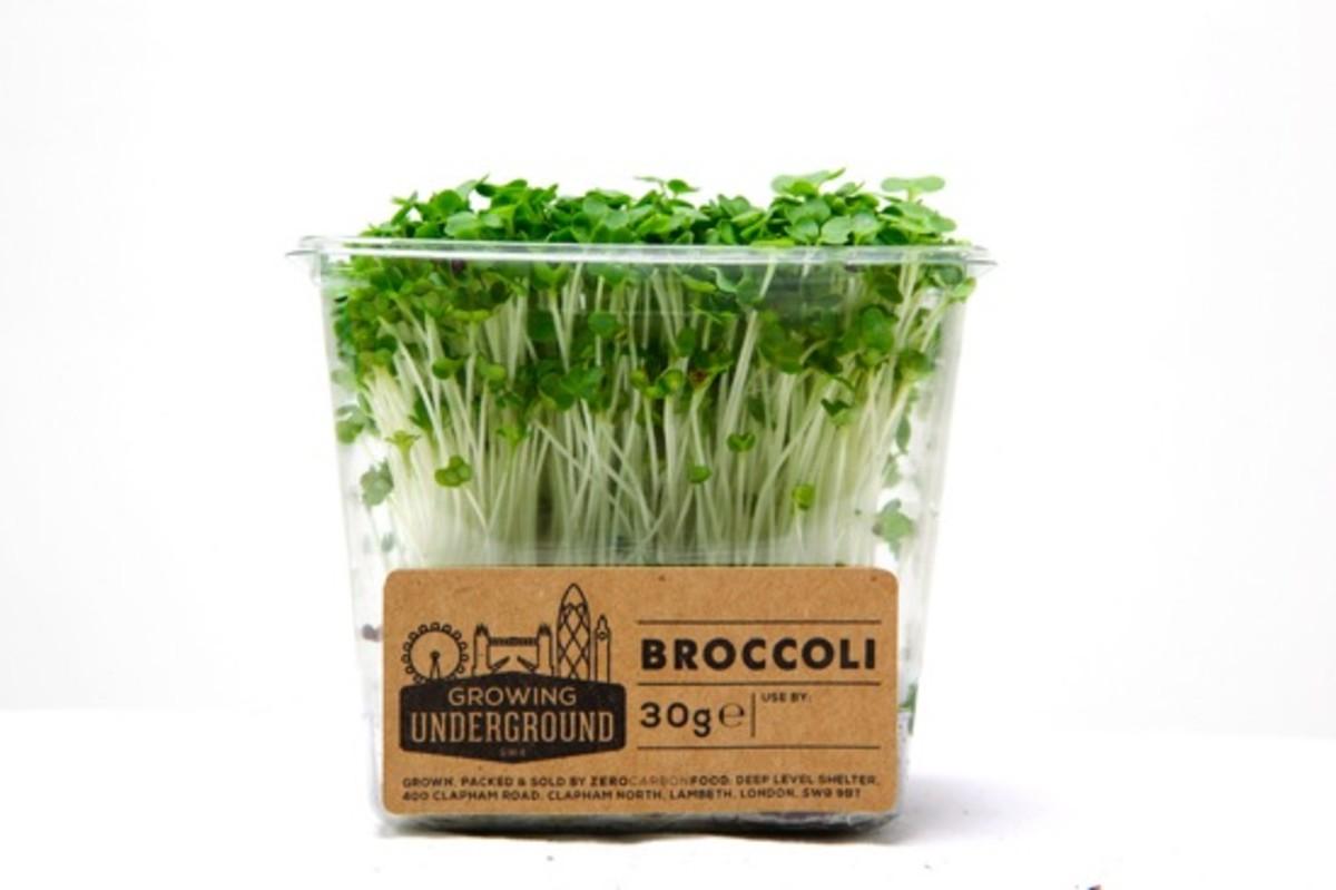 underground sprouts