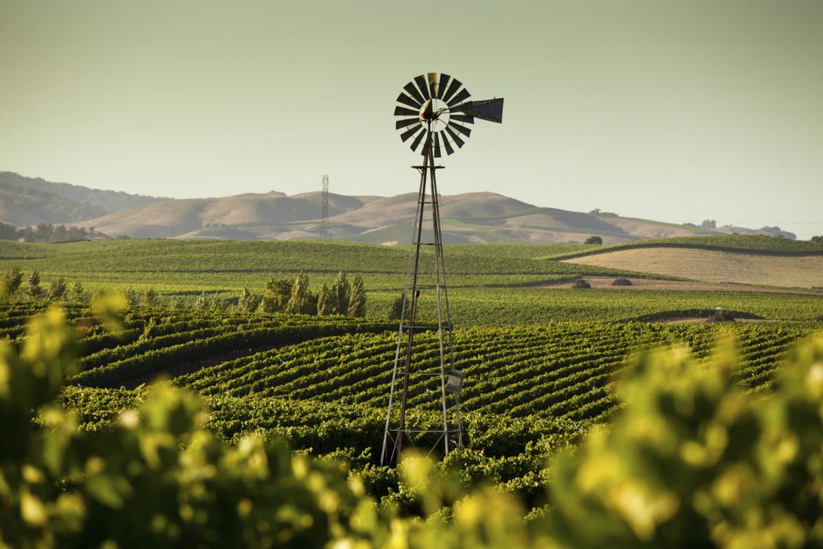 gmo crops prohibited in sonoma county