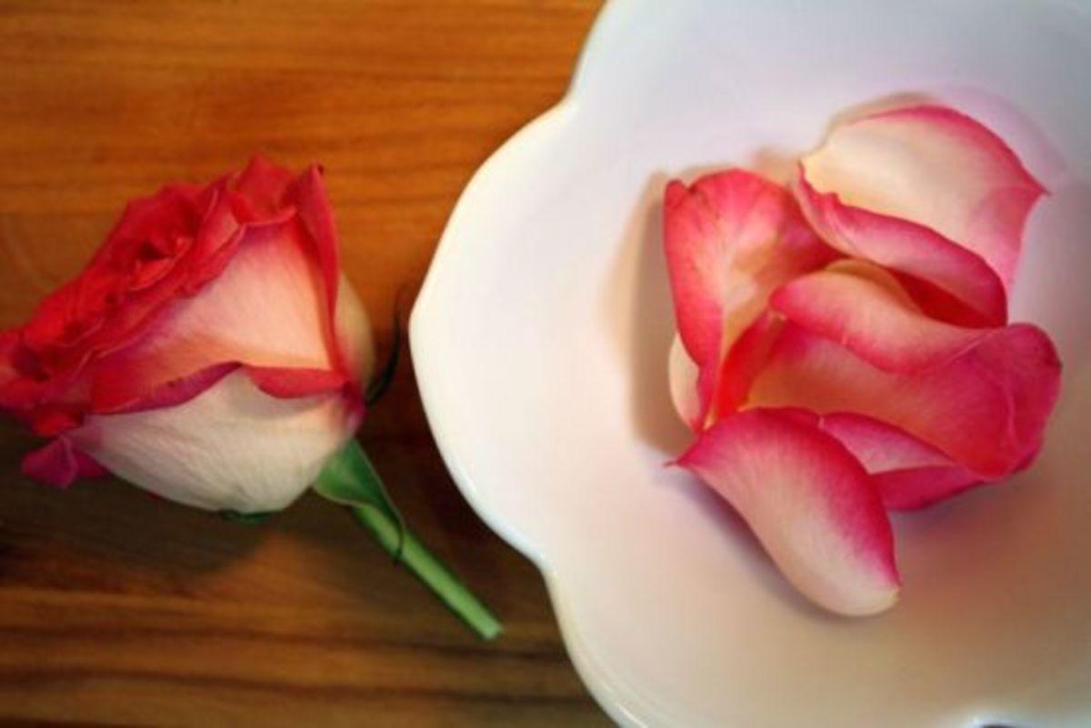 rosepetalhoney1_by_kimstakal