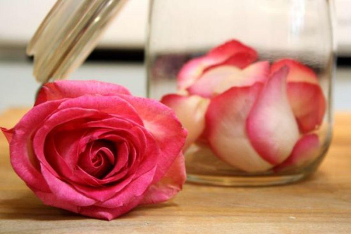 rosepetalhoney3_by_kimstakal