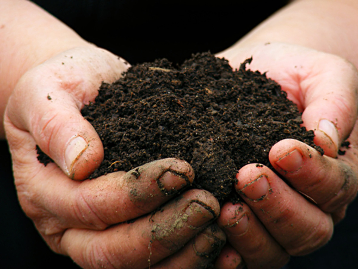 A Soil Microbe Turned New Antibiotic Could Save Us All
