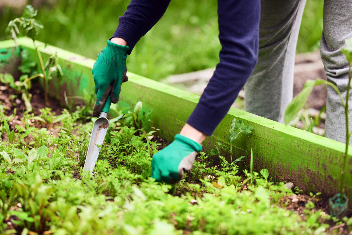 How to Make Weeding Your Garden Super Easy (Let a Garden Robot Do It!)