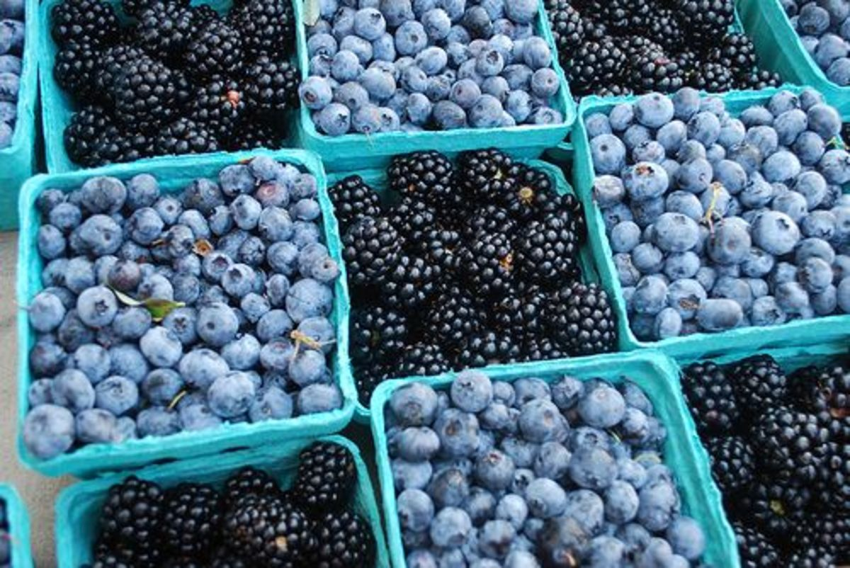 berries-ccflcr-fairfaxcounty