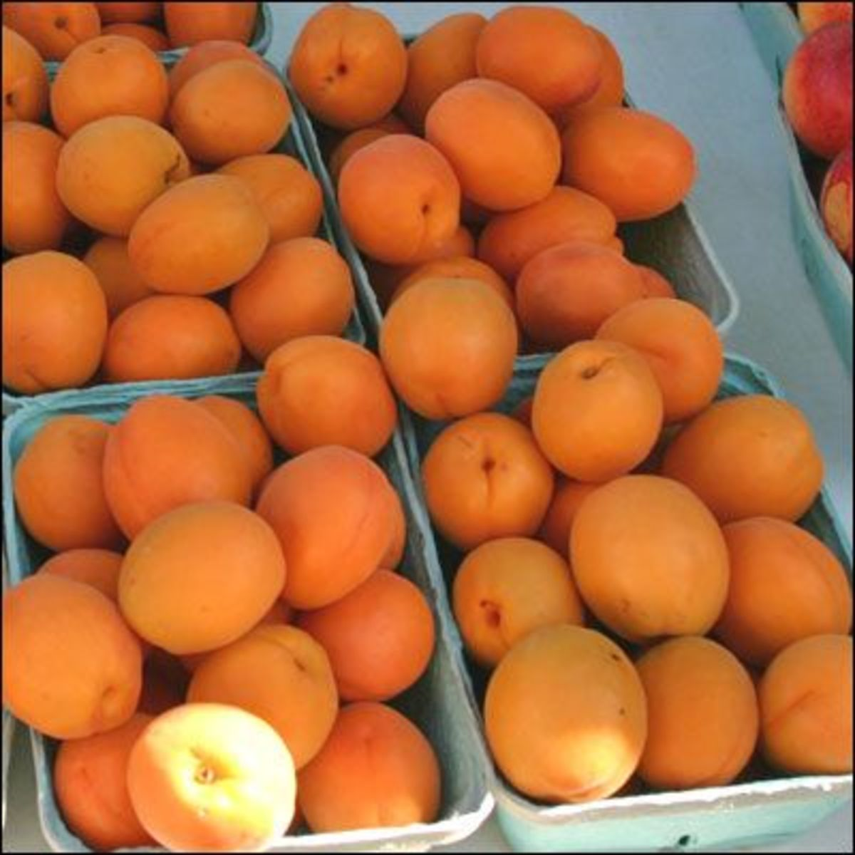 apricots-ccflcr-lagrandefarmersmarket