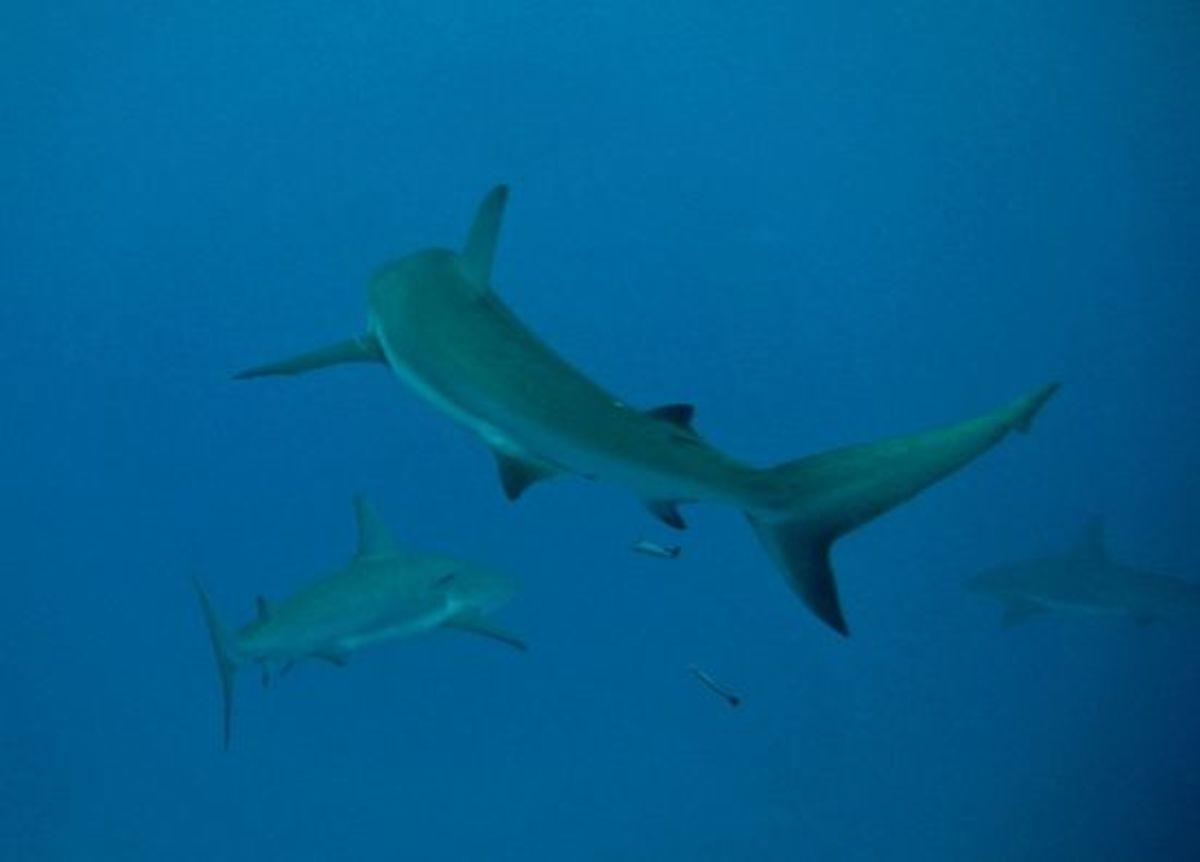 shark-ccflcr-mtarlock1