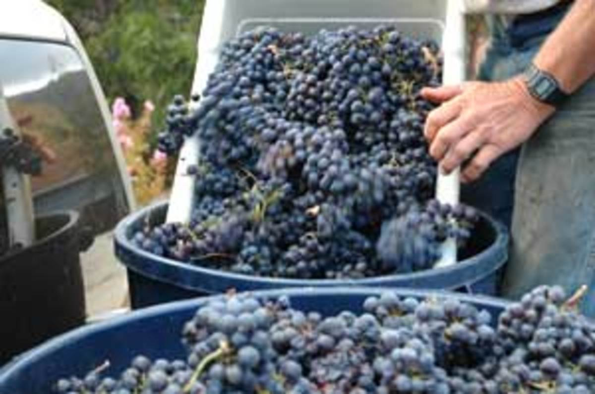 ton-o-grapes1