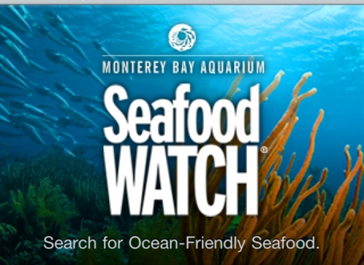 Find eco seafood with Monterey Bay's seafood watch app