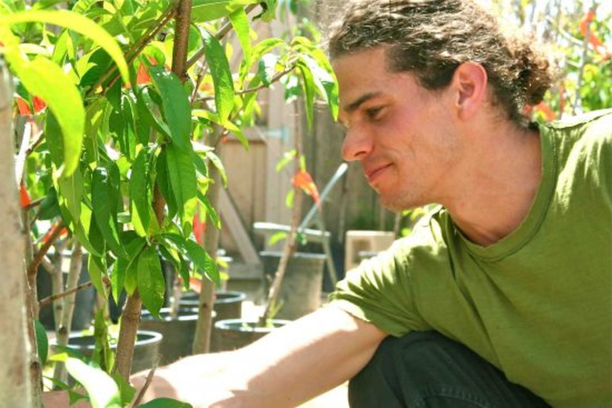 Baza Novic tending trees before planting