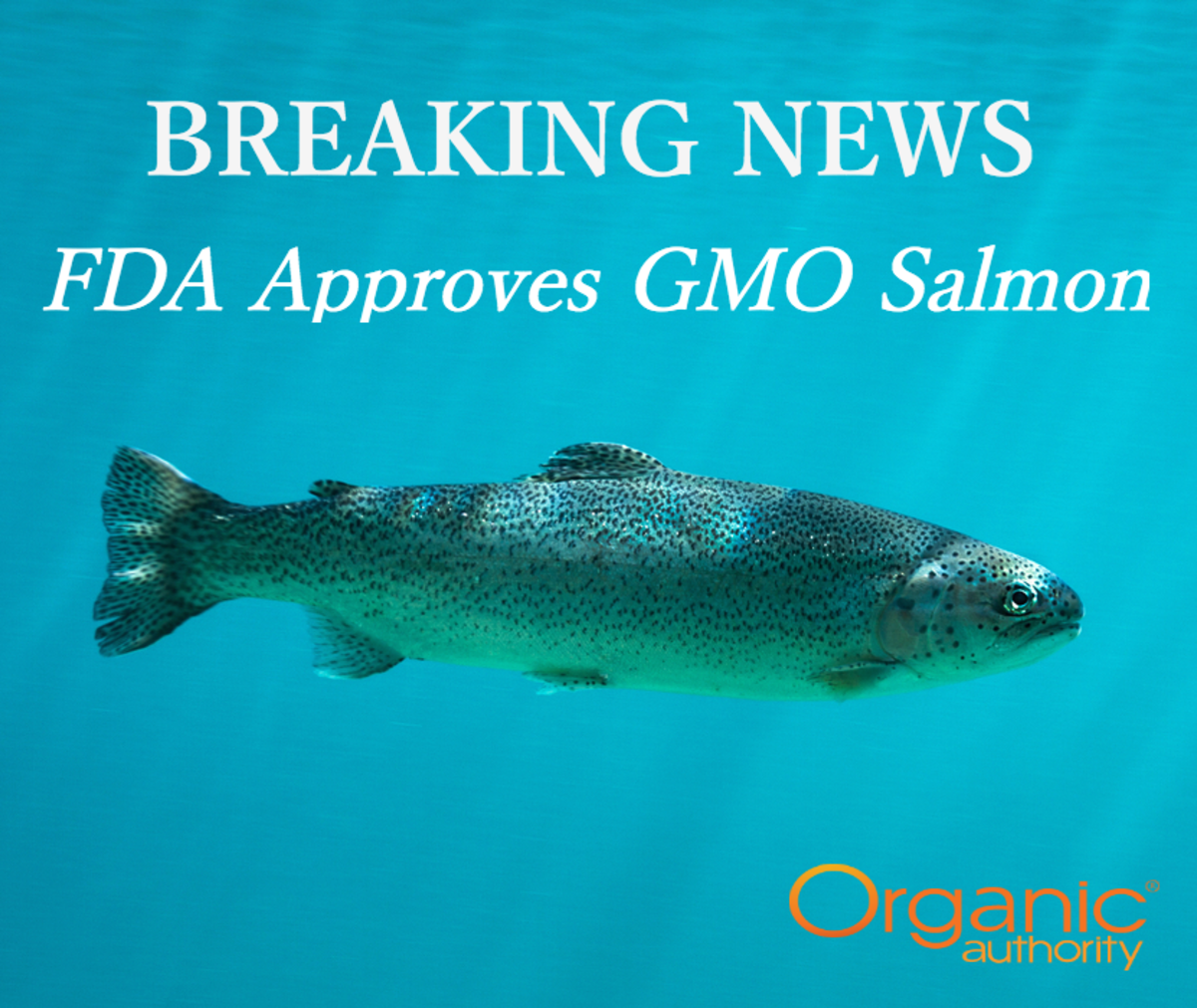 FDA Approves GMO Salmon, and You Won't Even Know You're Buying It