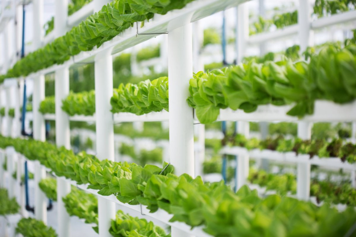 Organic Farmers Reject Hydroponics With 16 Protest Rallies