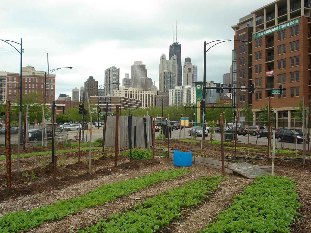 urban farm