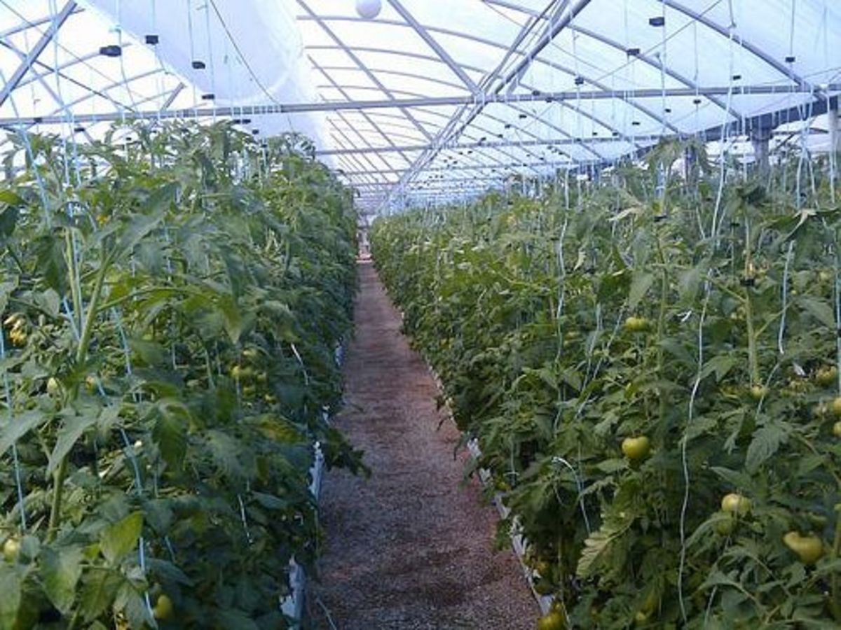 greenhouse_ccfler_jeffcouturier