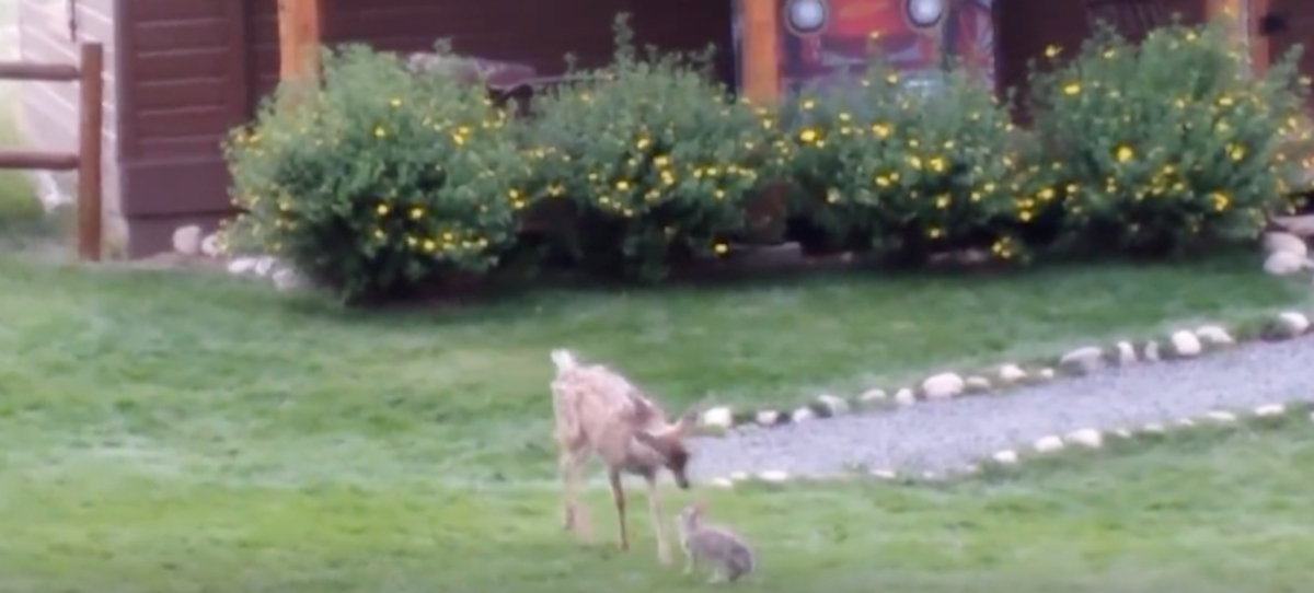 Take a Breather from the RNC Madness and Watch This Deer and Rabbit Play [Video]