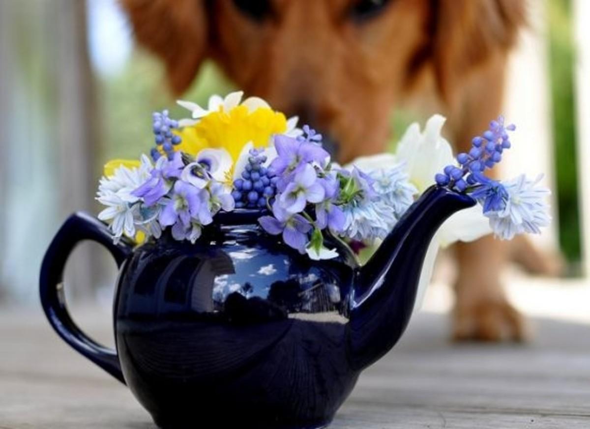 teapot-dog-ccflcr-wiserbailey