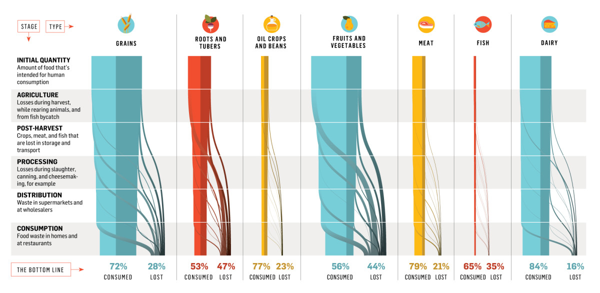 Food Waste in the World is a Really Big Problem