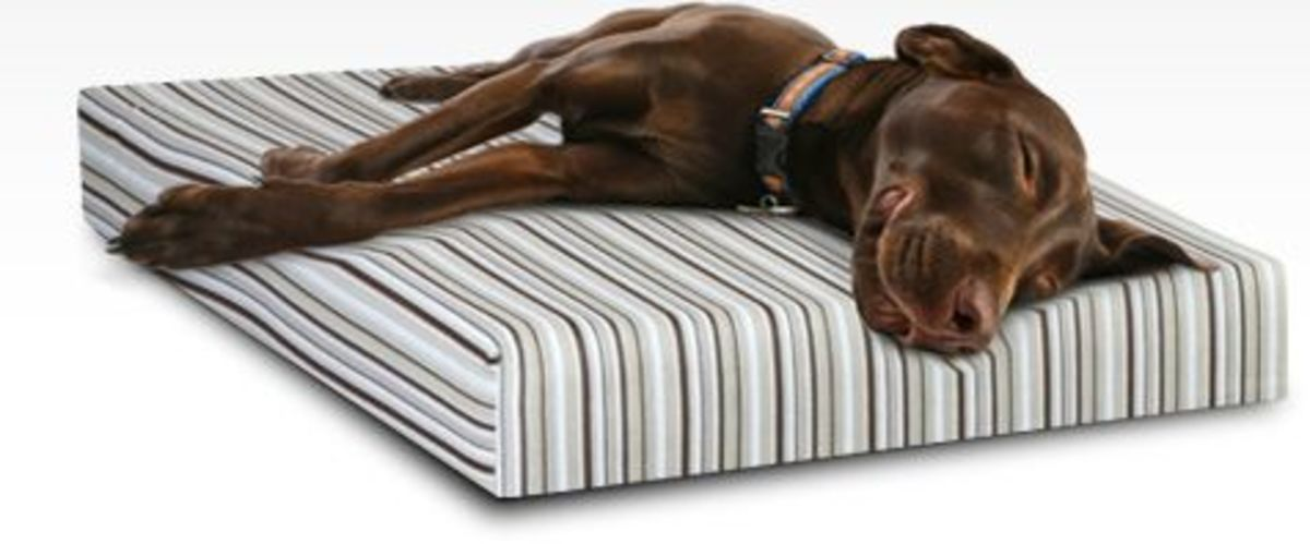 Essentia Dog Bed