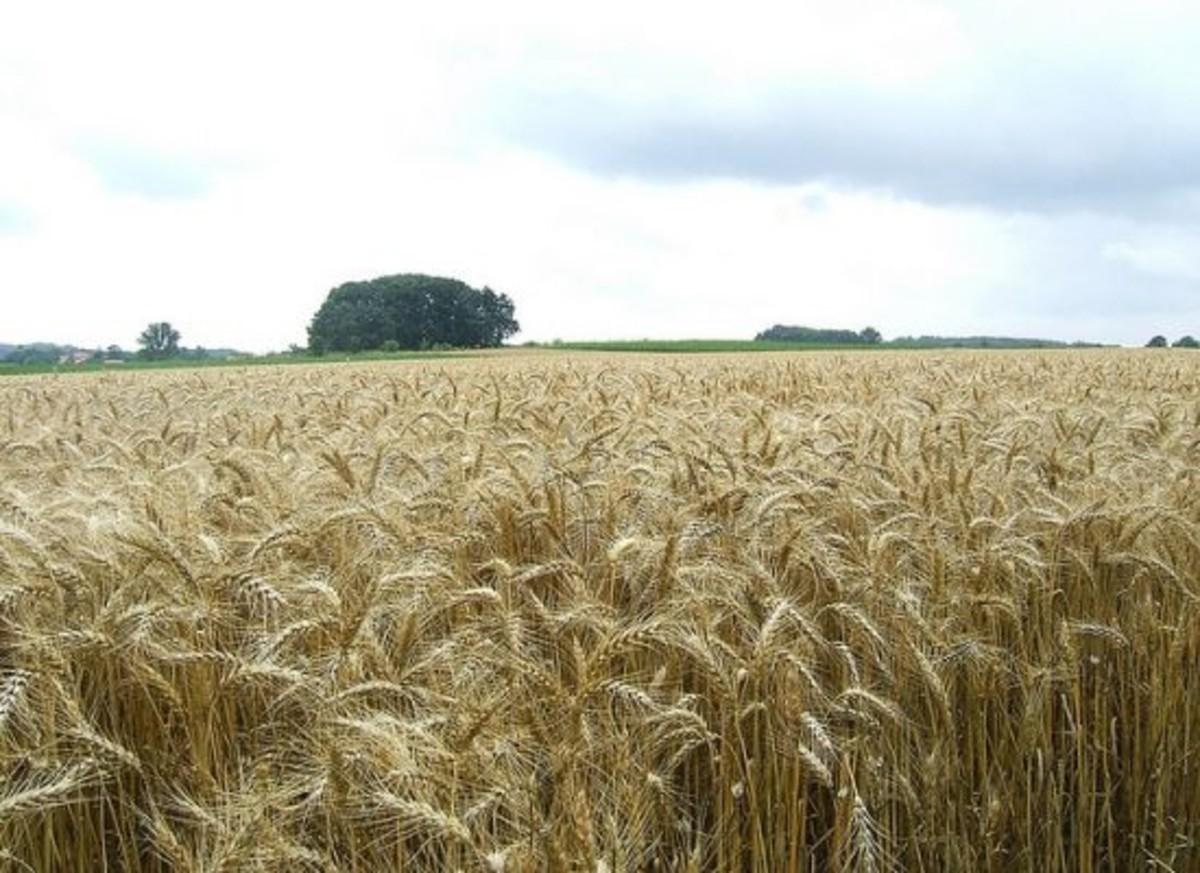 grainfield-ccflcr-LHOON