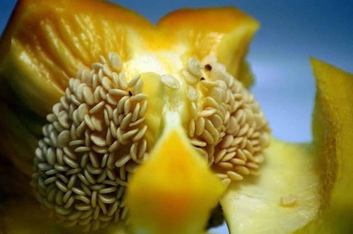 saving-veggie-seed-ccflcr-LilySusie