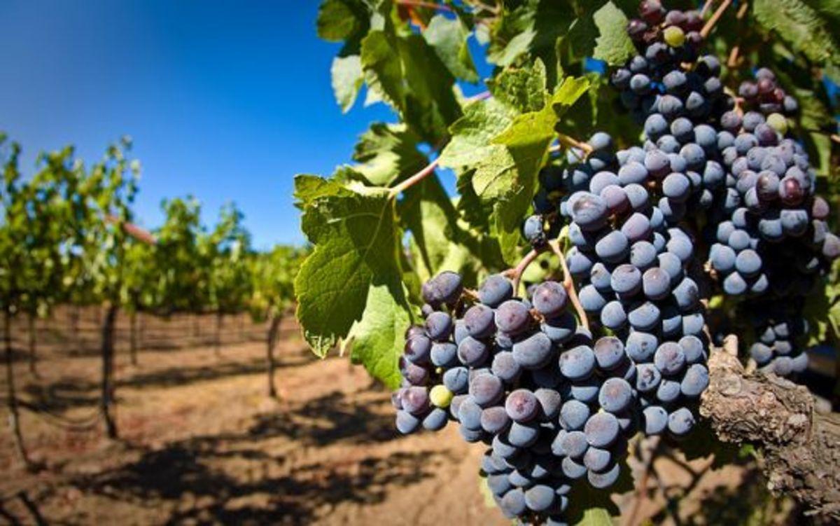 grapes-ccflcr-matt