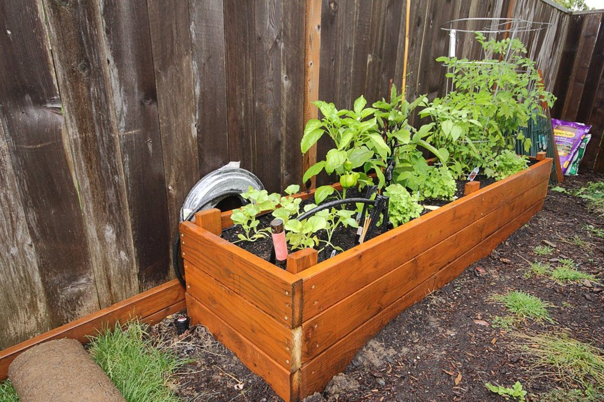 Growing peppers in your container vegetable garden organic authority - Planting pepper garden ...