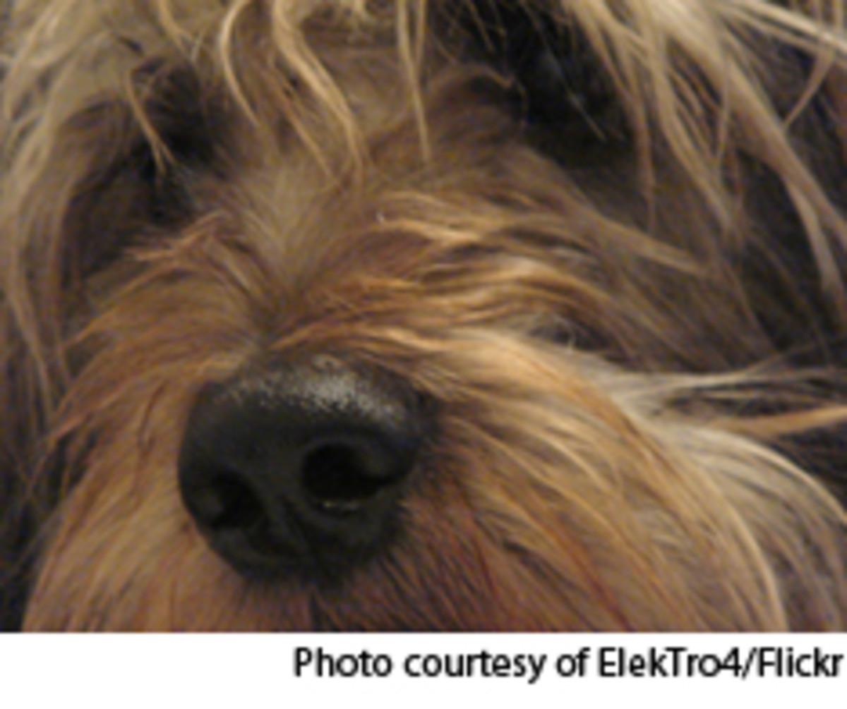 dog-ElekTro43