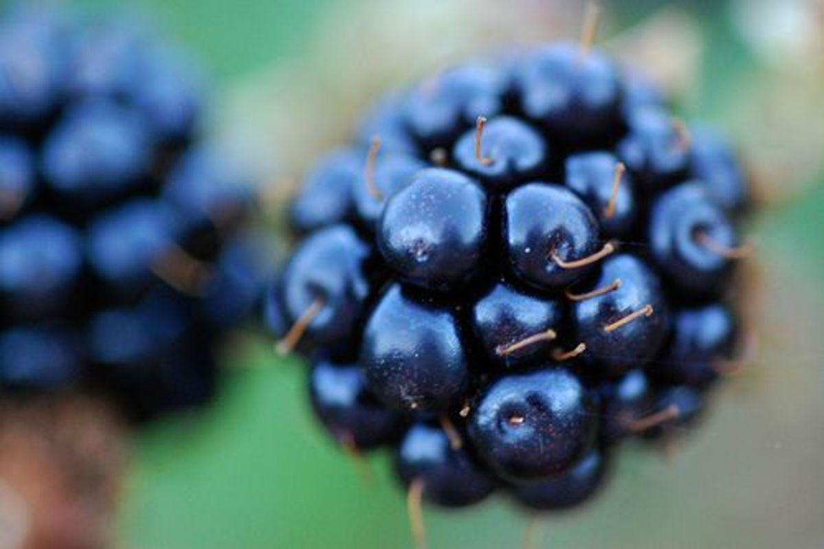 blackberry-ccflcr-steve-lodefink