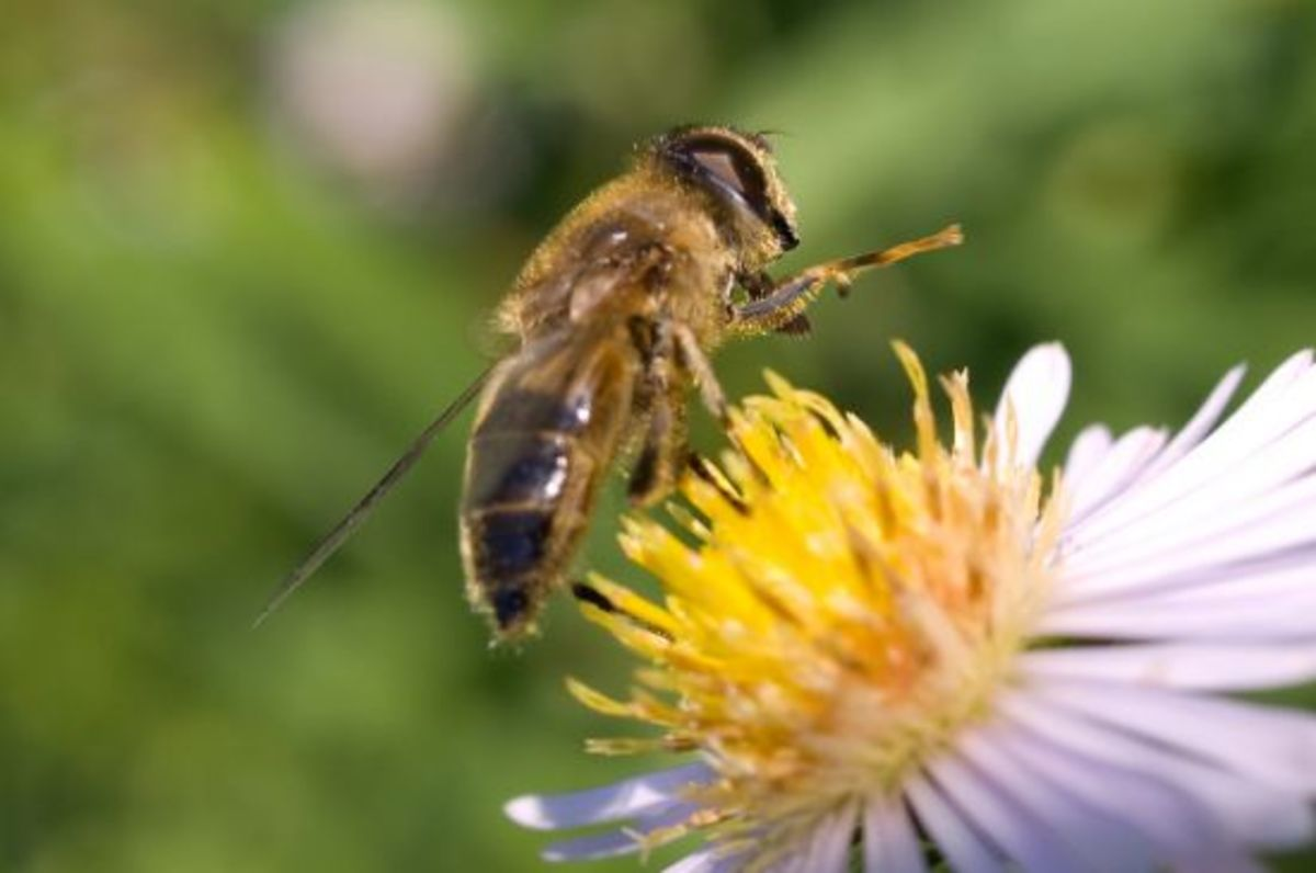 bees-ccflcr-wwarby
