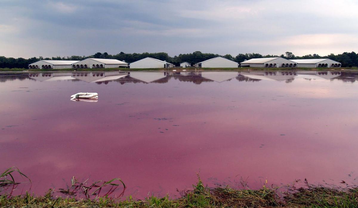 Hog Farms Hurricane Florence