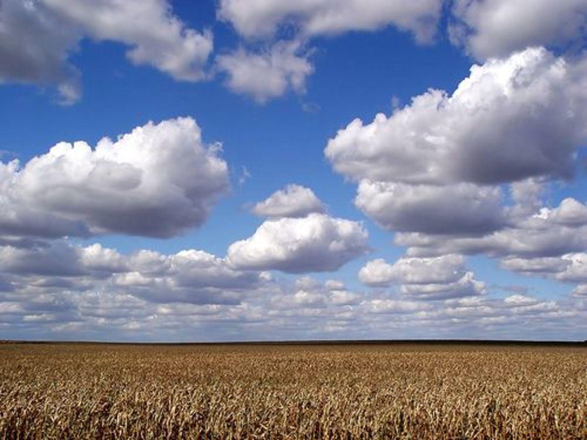 corn_field_ccfler_Kables
