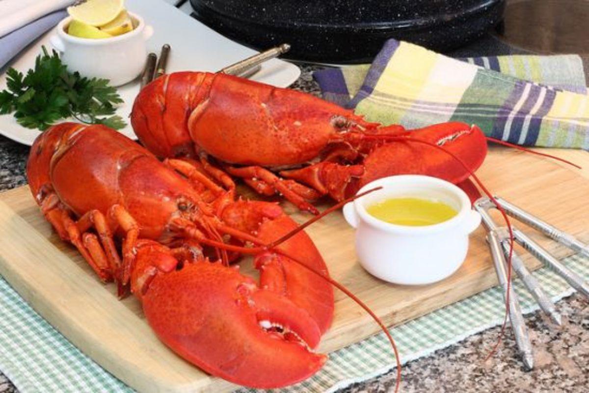 lobster-ccflcr-danamoos
