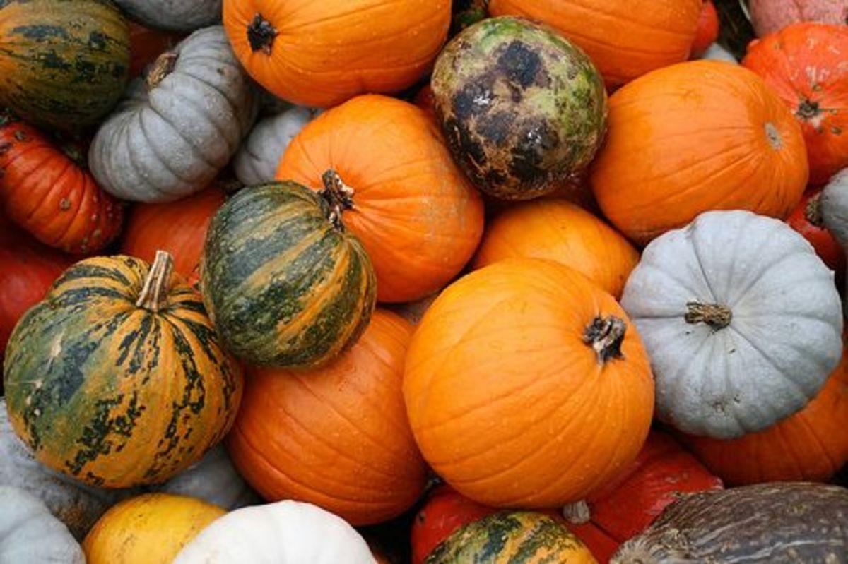 somebox_heirloom_pumpkins